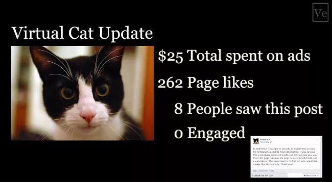 Статистика по фейковому аккаунту кота – 252$ потрачено на рекламу, залайкал 262 страницы, 8 человек просмотрели пост
